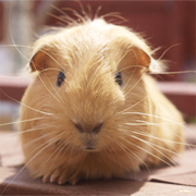 Our first social media 'experiment' for online marketing month. Do you want to be our guinea pig?