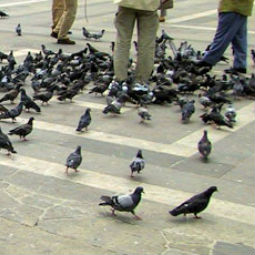 How to avoid being pigeonholed