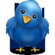 twitter bird