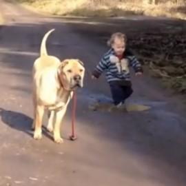 dogboypuddle