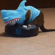 CatinSharkSuit